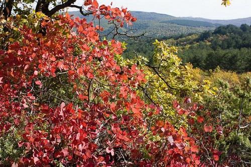 Осень на Тепе-Кермене