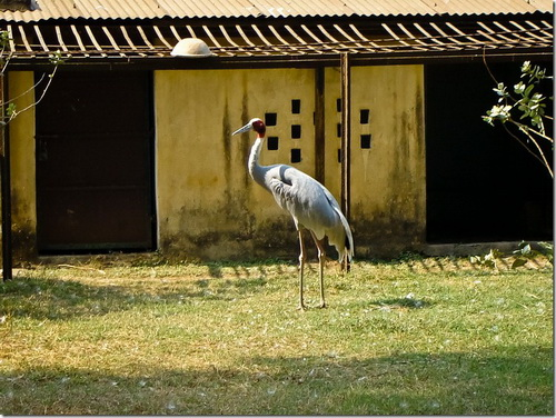 Колката, зоопарк