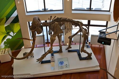 Скелет мамонта.