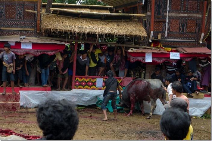 Ритуали Тана Тораджі